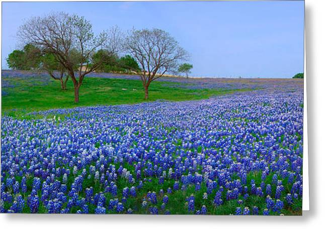 Award Photographs Greeting Cards - Bluebonnet Vista - Texas Bluebonnet wildflowers landscape flowers  Greeting Card by Jon Holiday