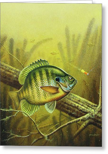 Weed Greeting Cards - Bluegill and Jig Greeting Card by JQ Licensing