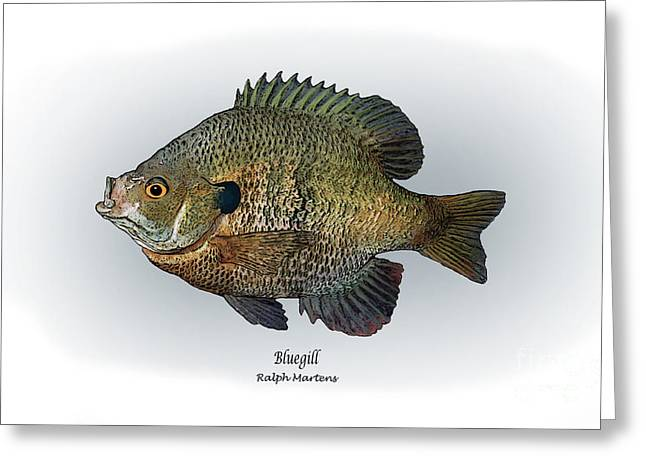 Sportfishing Greeting Cards - Bluegill Greeting Card by Ralph Martens