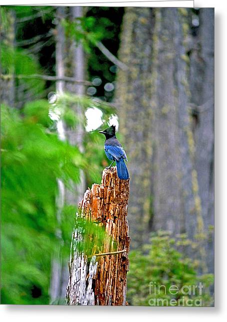 Bluejay On The Tree Stump Greeting Card by Randy Harris