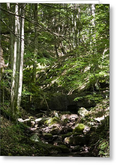 Lush Green Greeting Cards - Bluestone State Park Mountain Stream West Virginia Greeting Card by Teresa Mucha