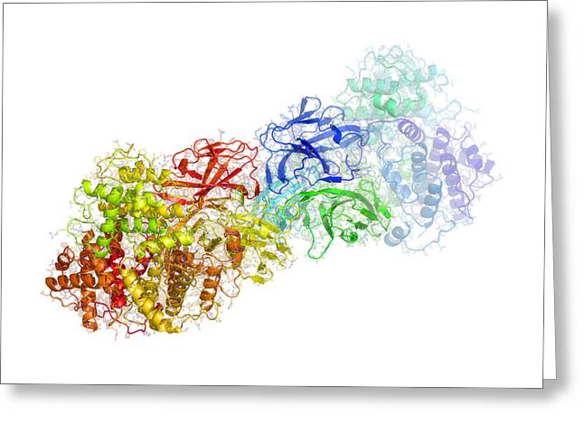 Microbiological Greeting Cards - Bluetongue Virus Protein Vp7 Structure Greeting Card by Laguna Design
