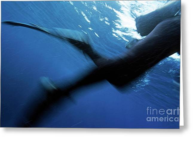 Scuba Diving Greeting Cards - Blurred legs and fins of scuba diver near the waters surface Greeting Card by Sami Sarkis