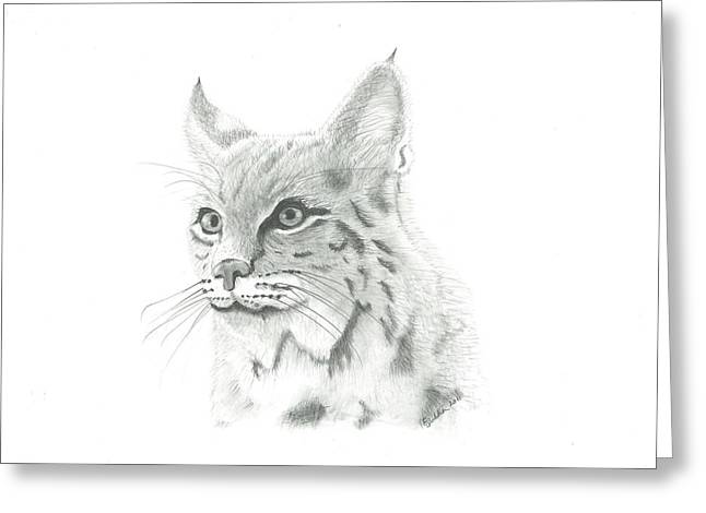 Bobcat Drawings Drawings Greeting Cards - Bob Cat 1 Greeting Card by EJ John Baldwin