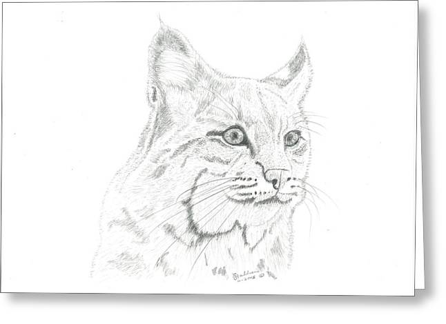 Bobcat Drawings Drawings Greeting Cards - Bob Cat 2 Greeting Card by EJ John Baldwin