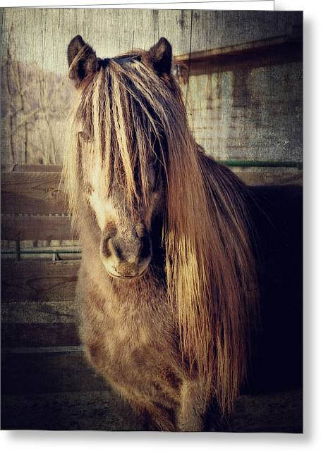Brown Horse Photographs Greeting Cards - Bobby Greeting Card by Kathy Jennings