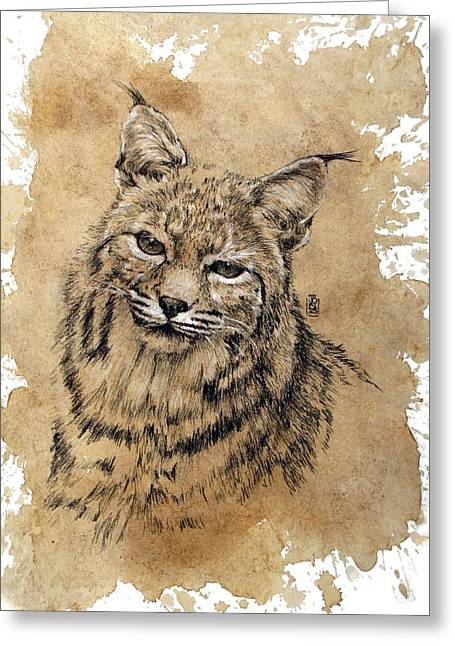Bobcat Drawings Drawings Greeting Cards - Bobcat Greeting Card by Debra Jones