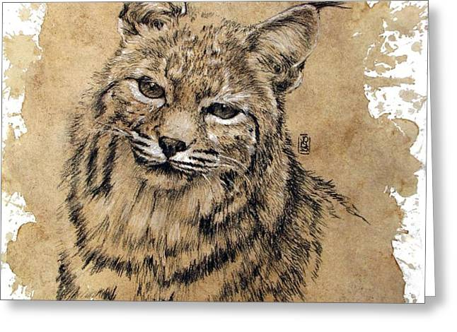 Bobcat Greeting Card by Debra Jones