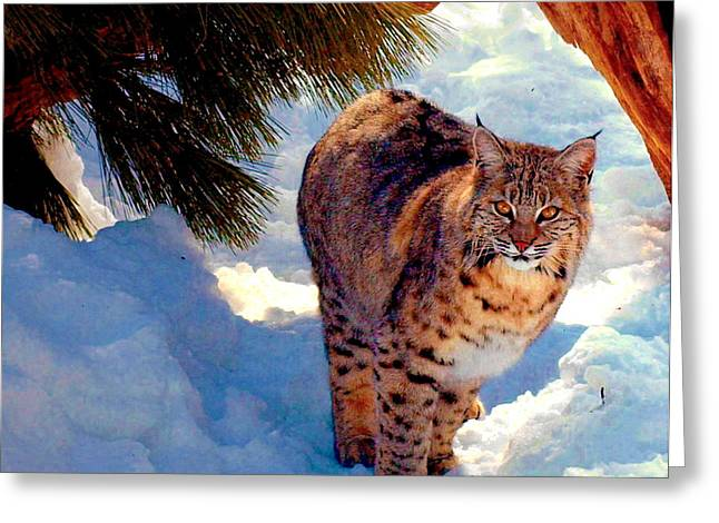 Bobcats Greeting Cards - Bobcat I Greeting Card by Christine S Zipps