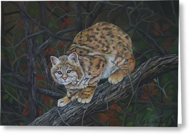Bobcats Mixed Media Greeting Cards - Bobcat Greeting Card by Joan Barnard