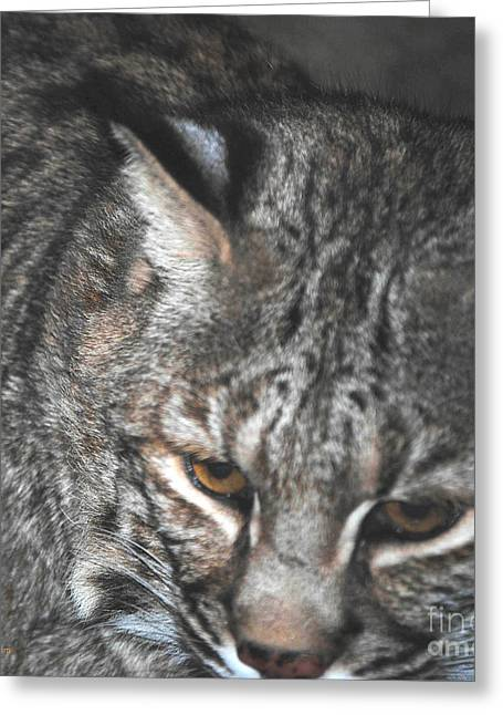 Bobcat Greeting Cards - Bobcat Love Greeting Card by DiDi Higginbotham