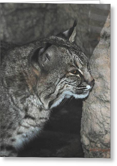 Bobcat Greeting Cards - Bobcat Love II Greeting Card by DiDi Higginbotham