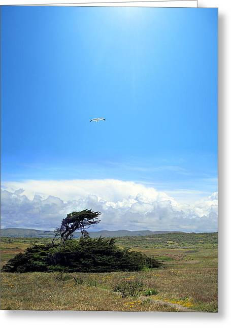 Luminist Greeting Cards - Bodega Bay Greeting Card by Ric Soulen