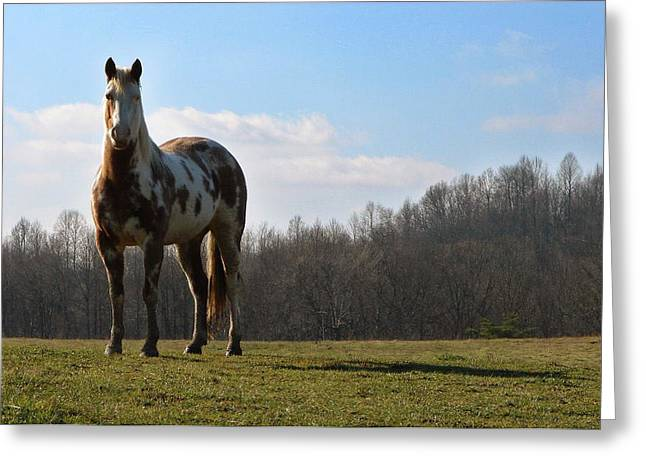 Galloper Greeting Cards - Bold and beautiful Greeting Card by Brian Stevens