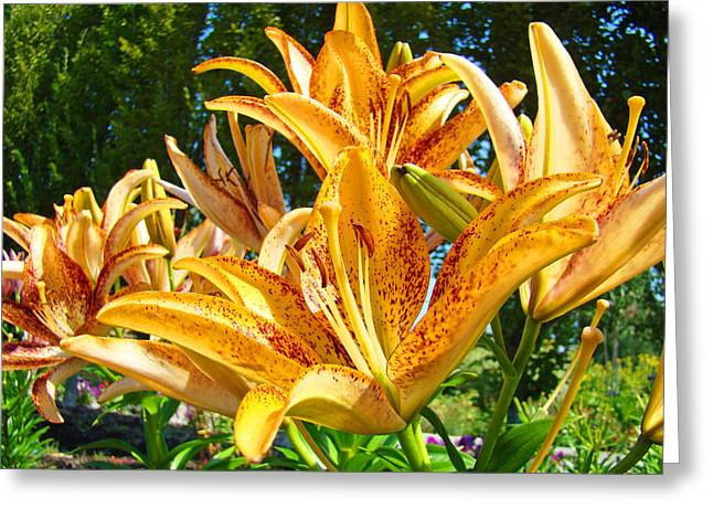 Lilies Framed Prints Greeting Cards - Bold Colorful Orange Lily Flowers Garden Greeting Card by Baslee Troutman