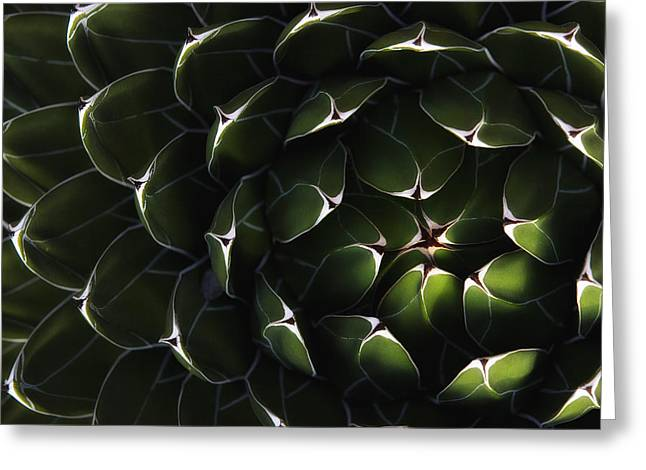Without Lights Greeting Cards - Bolivian Plant In Late Afternoon Light Greeting Card by Robert Postma