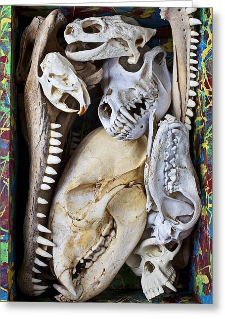 Fangs Greeting Cards - Bone Box Greeting Card by Garry Gay