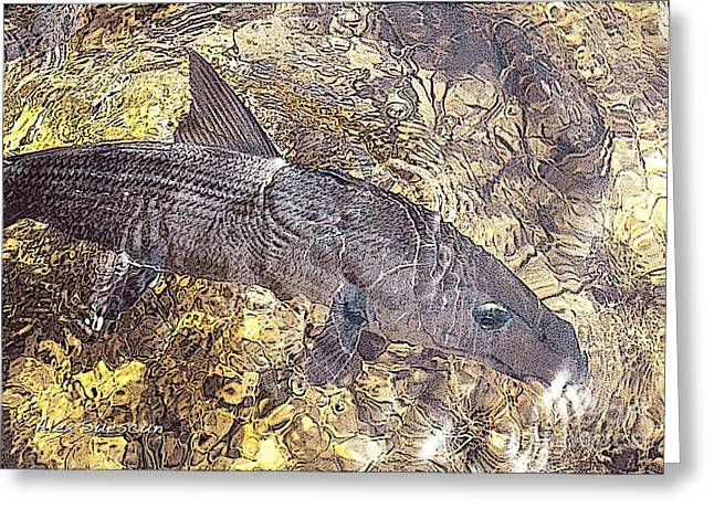 Fly Fishing Drawings Greeting Cards - Bonefish World Greeting Card by Alex Suescun