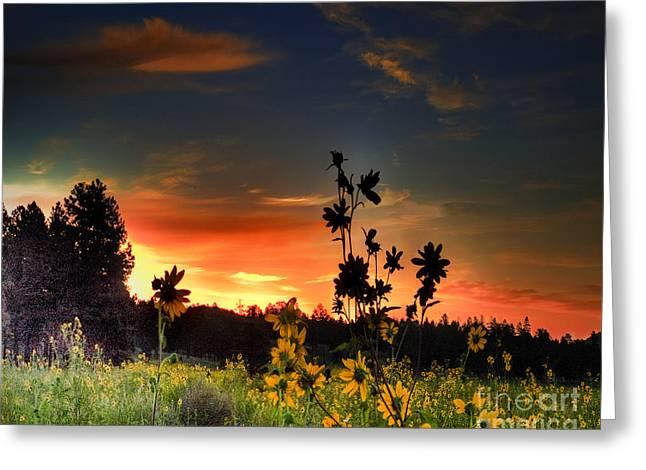 Arne J Hansen Greeting Cards - Bonita Meadow Greeting Card by Arne Hansen
