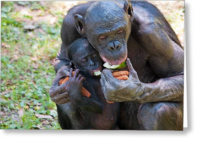Caring Mother Greeting Cards - Bonobo 3 Greeting Card by Kenneth Albin