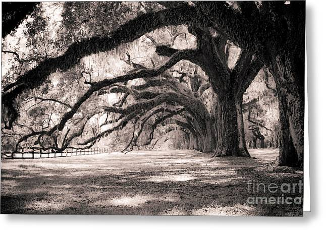 Hall Photographs Greeting Cards - Boone Hall Plantation Live Oaks Greeting Card by Dustin K Ryan