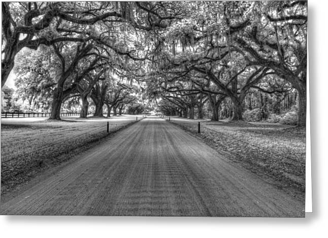 South Carolina Infrared Landscape Greeting Cards - Boone Plantation Driveway Greeting Card by Nick  Shirghio