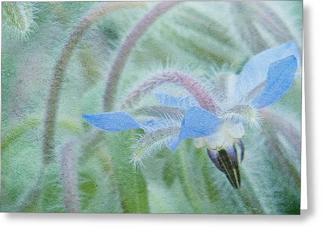 Floral Photographs Greeting Cards - Borage Greeting Card by Bonnie Bruno