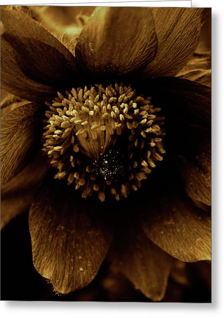 Abstract Digital Photographs Greeting Cards - Borange Greeting Card by Jerry Cordeiro