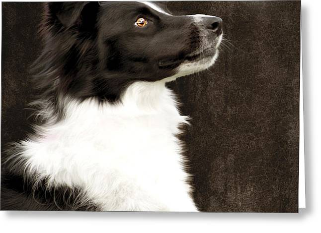 Border Collie Dog Watching Butterfly Greeting Card by Ethiriel  Photography