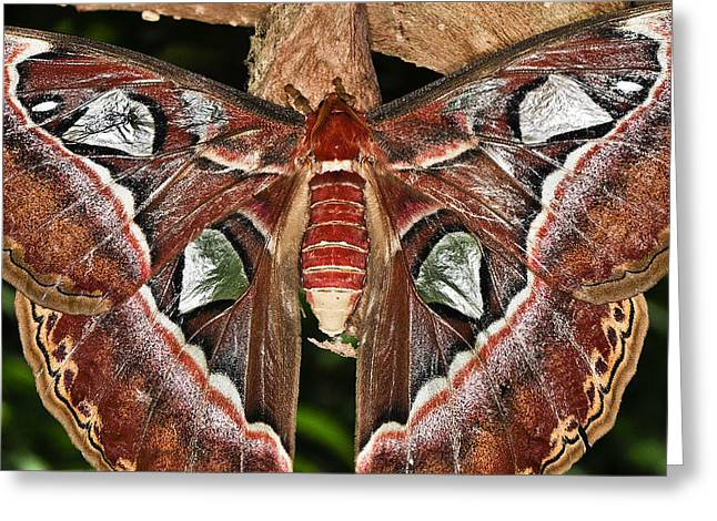 Cocoon Greeting Cards - Born Again Greeting Card by Melody Gleichman