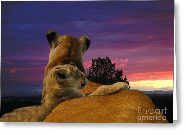Lioness Greeting Cards - Born Free II Greeting Card by Al Bourassa