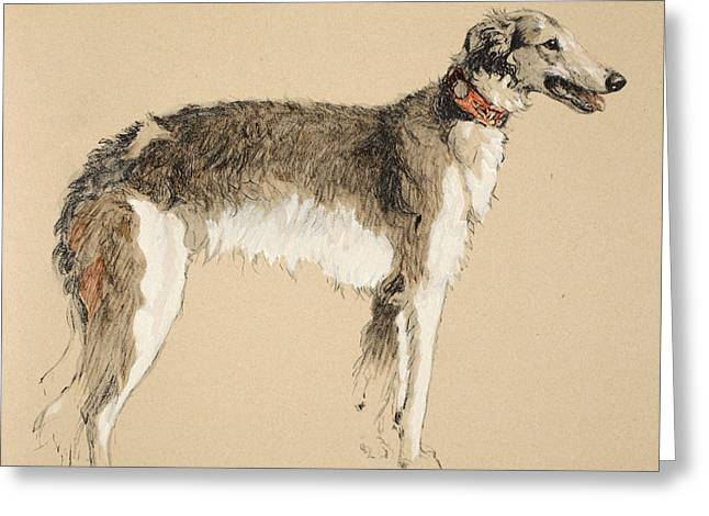 Collar Greeting Cards - Borzoi Greeting Card by Cecil Charles Windsor Aldin