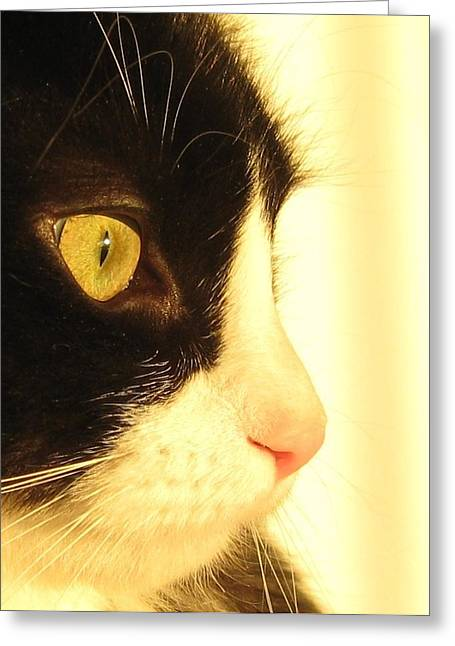Tuxedo Greeting Cards - Bosco A Greeting Card by John Conrad Johnson III