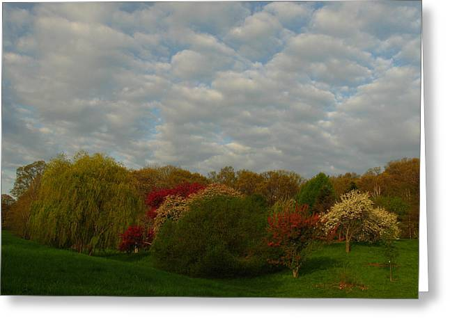 New Greeting Cards - Boston Arnold Arboretum Greeting Card by Juergen Roth