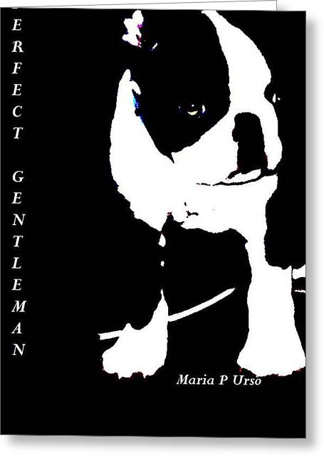 White Terrier Mixed Media Greeting Cards - Boston Terrier Puppy Greeting Card by Maria Urso