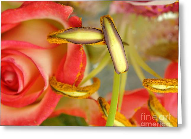 Did You See That Greeting Cards - Botanical Paradise Greeting Card by Maria Varnalis