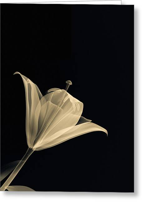 Nature Study Greeting Cards - Botanical Study 3 Greeting Card by Brian Drake - Printscapes