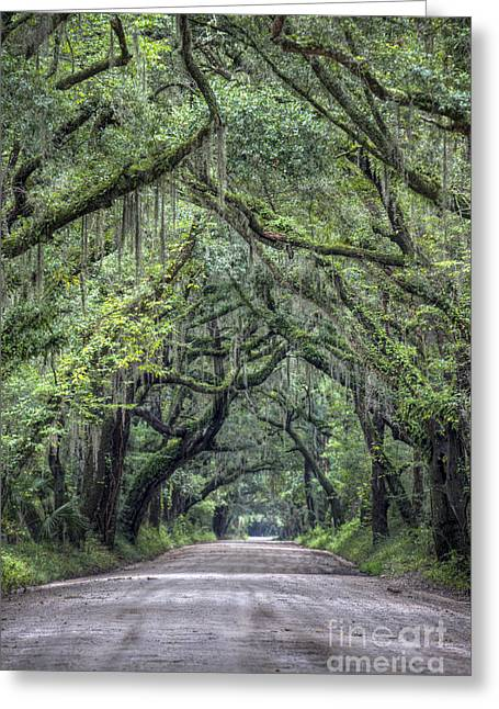 Botany Photographs Greeting Cards - Botany Bay Country Road Greeting Card by Dustin K Ryan