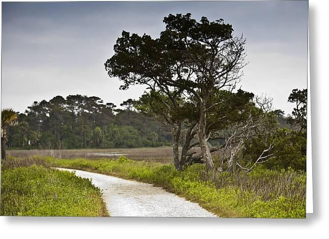 Charleston Pathway Greeting Cards - Botany Bay Pathway Tree Greeting Card by Donni Mac