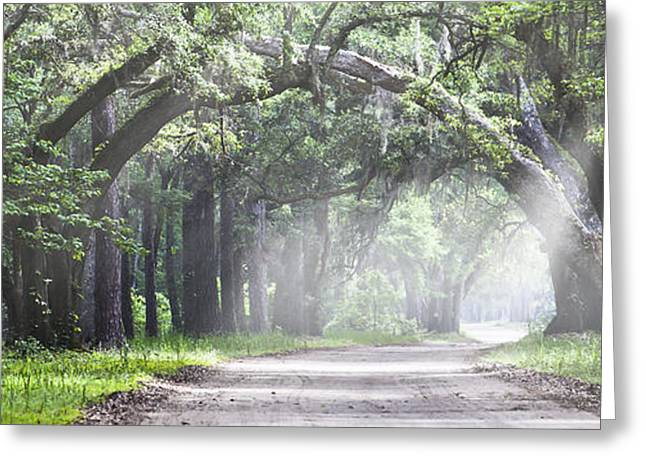 Donny Greeting Cards - Botany Bay Road - Panoramic Greeting Card by Donni Mac