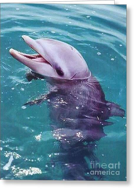 Bottle Nosed Dolphin Greeting Card by Diane Kurtz
