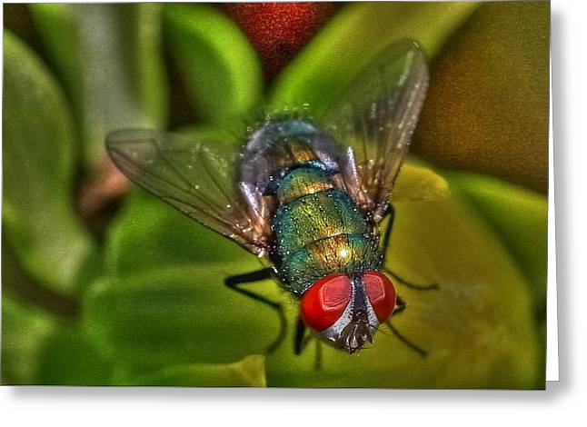 Photo Art Gallery Greeting Cards - Bottleneck Fly Greeting Card by Mark Hinrichs