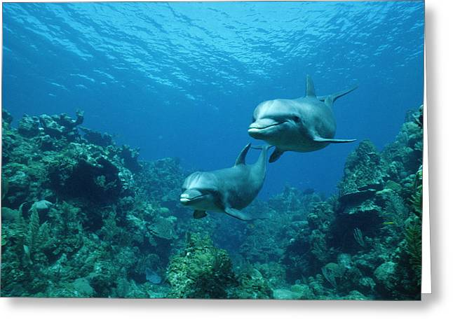 Bottlenose Dolphins and Coral Reef Greeting Card by Konrad Wothe