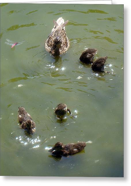 Ducklings Digital Greeting Cards - Bottoms Up Greeting Card by David G Paul