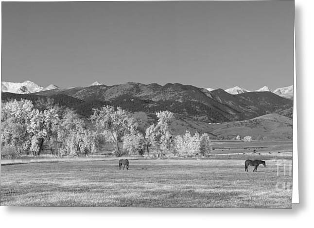 Grazing Snow Greeting Cards - Boulder County Colorado Front Range Panorama With Horses BW Greeting Card by James BO  Insogna