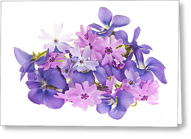 Moss Greeting Cards - Bouquet of spring flowers Greeting Card by Elena Elisseeva