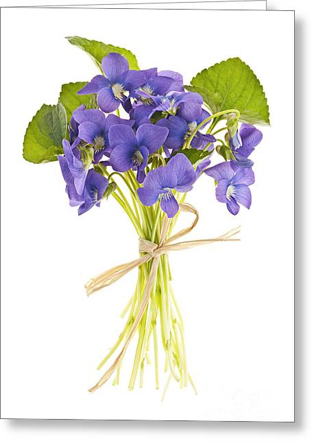 Fresh Greeting Cards - Bouquet of violets Greeting Card by Elena Elisseeva