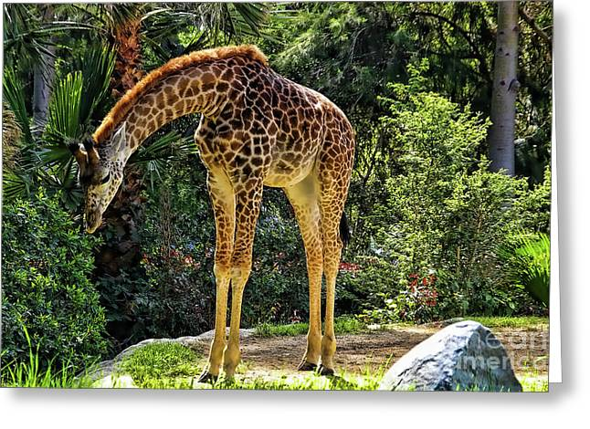 Bowing Giraffe Greeting Card by Mariola Bitner