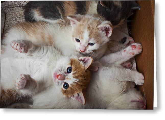 Kitten Greeting Cards - Box Full Of Kittens Greeting Card by Garry Gay