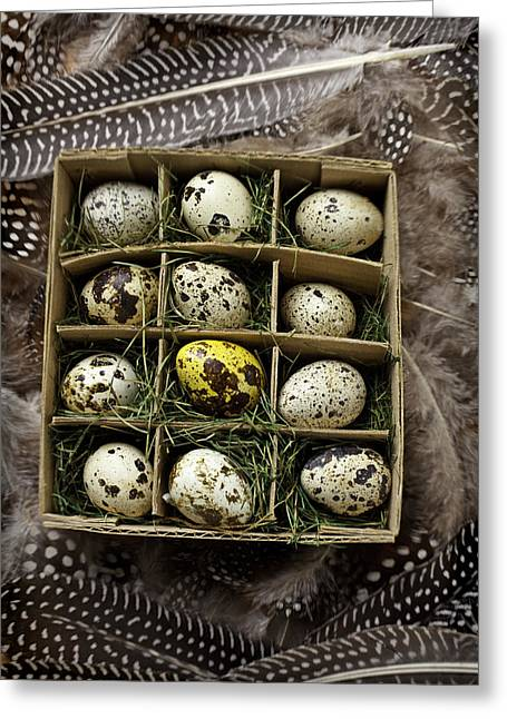 Cardboard Photographs Greeting Cards - Box of quail eggs Greeting Card by Garry Gay